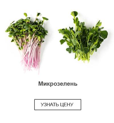 микрозелень купить в магазине