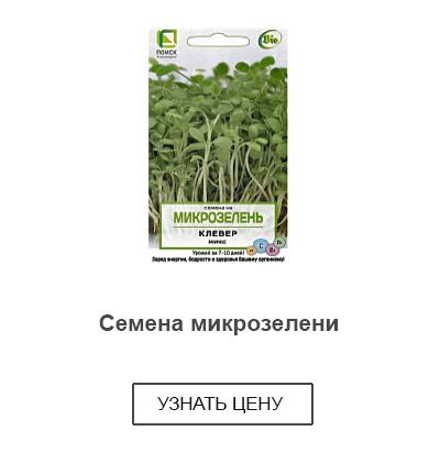 семена для выращивания купить